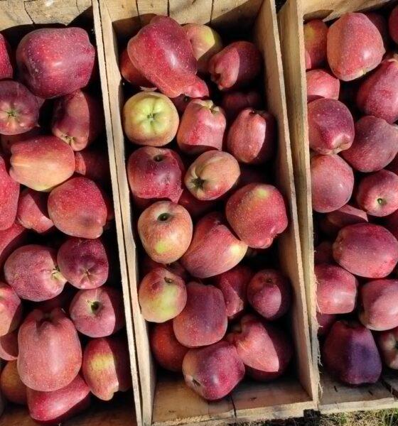 No cess on Kashmir apples