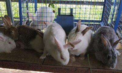 Kashmir's only rabbit farm
