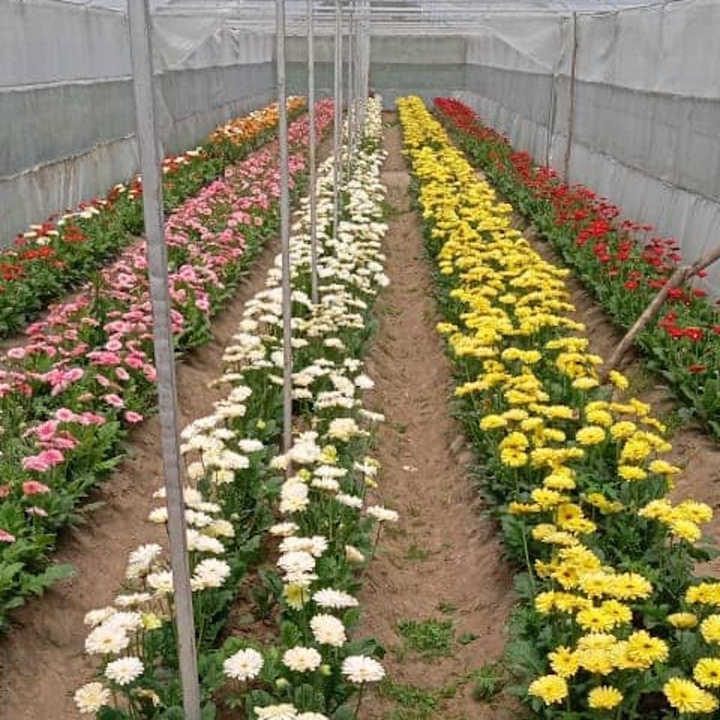 Floriculture Startups Kashmir